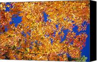 Selection Canvas Prints - Autumn Leaves Canvas Print by Natural Selection Craig Tuttle