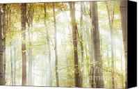 Magic Forest Canvas Prints - Autumn Light Canvas Print by Violet Damyan