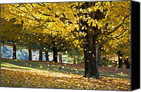 North Carolina Canvas Prints - Autumn Maple Tree Fall Foliage - Wonderland Canvas Print by Dave Allen