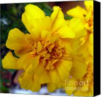 Indiana Autumn Canvas Prints - Autumn Marigold 2 Canvas Print by Alys Caviness-Gober