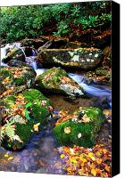 Rushing Mountain Stream Canvas Prints - Autumn Monongahela National Forest Canvas Print by Thomas R Fletcher