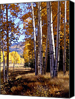 Orange Digital Art Canvas Prints - Autumn Paint Chama New Mexico Canvas Print by Kurt Van Wagner