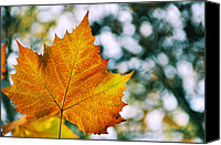 Gold Leave Canvas Prints - Autumn Painting Canvas Print by JAMART Photography