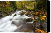 Rainforest Canvas Prints - Autumn Passages Canvas Print by Mike  Dawson