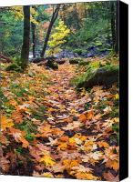 Autumn Leaves Canvas Prints - Autumn Path Canvas Print by Mike  Dawson