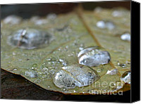 Autumn Canvas Prints - Autumn Rain Canvas Print by Juergen Roth