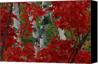 Chromatic Contrasts Canvas Prints - Autumn Red Maple Leave Frame Canvas Print by Medford Taylor