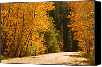 Foilage Canvas Prints - Autumn Road Canvas Print by James Bo Insogna