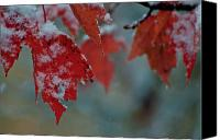 Gold Leave Canvas Prints - Autumn Snow Canvas Print by Venura Herath