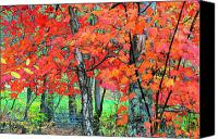Mountain Stream Canvas Prints - Autumn Sugar Maple Canvas Print by Thomas R Fletcher