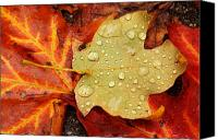 Matthew Green Canvas Prints - Autumn treasures Canvas Print by Matthew Green