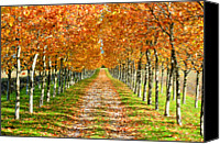 Dirt Road Canvas Prints - Autumn Tree Canvas Print by Julien Fourniol/Baloulumix