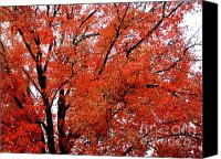 Indiana Autumn Canvas Prints - Autumn Treetop Canvas Print by Veronica Wiggins