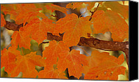 Fall Leaves Glass Art Canvas Prints - Autumn Canvas Print by Trice Jacobs