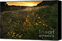 Indiana Autumn Canvas Prints - Autumn Wildflower Sunset - D007757 Canvas Print by Daniel Dempster