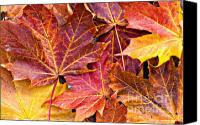 Brown Color Canvas Prints - Autumnal Carpet Canvas Print by Meirion Matthias