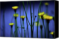 Aster Canvas Prints - Avatar Flowers Canvas Print by Mauro Cociglio - Turin - Italy