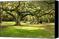 Live Oaks Canvas Prints - Avery Island Oaks Canvas Print by Scott Pellegrin