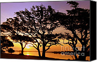 Daybreak Canvas Prints - Awakening Canvas Print by Karen Wiles