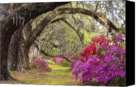 Nature Photo Canvas Prints - Azalea Lane Canvas Print by Joseph Rossbach
