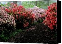Debbie Canvas Prints - Azalea Pathway Canvas Print by Deborah  Crew-Johnson
