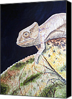 Chameleon Canvas Prints - Baby Chameleon Canvas Print by Irina Sztukowski