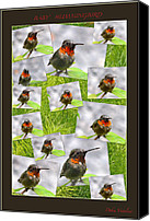 Humming Bird Canvas Prints - Baby Hummingbird Collage Canvas Print by Debra     Vatalaro
