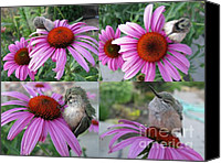 Flower Special Promotions - Baby Hummingbird Collage Canvas Print by Stephanie Wenzl