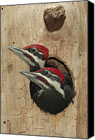 Woodpecker Canvas Prints - Baby Pileated Woodpeckers Peer Canvas Print by George Grall