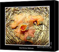 Father Christmas Canvas Prints - Baby Robins newly hatched Canvas Print by Rose Santuci-Sofranko