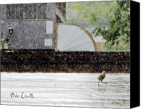 Bathroom Canvas Prints - Baby Seagull Running in the rain Canvas Print by Bob Orsillo