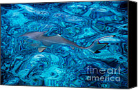 Natural Abstract Canvas Prints - Baby Shark in the Turquoise Water. Production by Nature Canvas Print by Jenny Rainbow