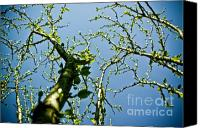 (c) 2010 Canvas Prints - Baby Spring Tree Leaves 02 Canvas Print by Ryan Kelly