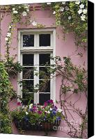 Camellia Canvas Prints - Back Alley Window Box - D001793 Canvas Print by Daniel Dempster