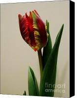 Got Canvas Prints - Back of Double Tulip Canvas Print by Marsha Heiken