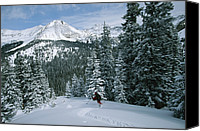 Snow Scenes Photo Canvas Prints - Backcountry Skiing Into An Evergreen Canvas Print by Tim Laman