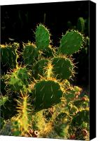 Verticle Canvas Prints - Backlit Cacti Canvas Print by Jerry McElroy