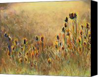 Frances Marino Canvas Prints - Backlit Thistle Canvas Print by Frances Marino