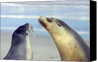 Seal Canvas Prints - Backtalk Canvas Print by Mike  Dawson