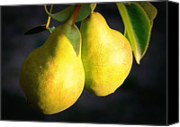 Food And Beverage Canvas Prints - Backyard Garden Series - Two Pears Canvas Print by Carol Groenen