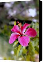 Debbie Photo Canvas Prints - Bahamian Flower Canvas Print by Deborah  Crew-Johnson