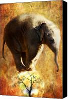 Zoo Canvas Prints - Balance Canvas Print by Trudi Simmonds