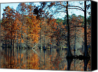 Lifestyle Prints Photo Canvas Prints - Bald Cypress in Autumn Canvas Print by Theresa Johnson