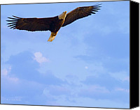 Bald Eagle Canvas Prints - Bald Eagle - The Grand Master 2 Canvas Print by J Larry Walker
