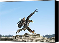 Father Christmas Canvas Prints - Bald Eagle Landing Canvas Print by Derek Holzapfel
