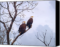 Bald Eagle Canvas Prints - Bald Eagle Pair Looking At Storm Coming Canvas Print by J Larry Walker