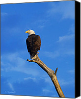 Walker Digital Art Canvas Prints - Bald Eagle Sitting High Canvas Print by J Larry Walker