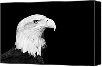 Bald Eagle Canvas Prints - Bald Eagle Canvas Print by Stephanie McDowell