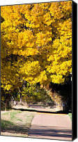 Yellow Trees Canvas Prints - Ball of Fire Canvas Print by Dana Kern