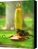 Oriole Canvas Prints - Baltimore Oriole on the feeder Canvas Print by David Bearden